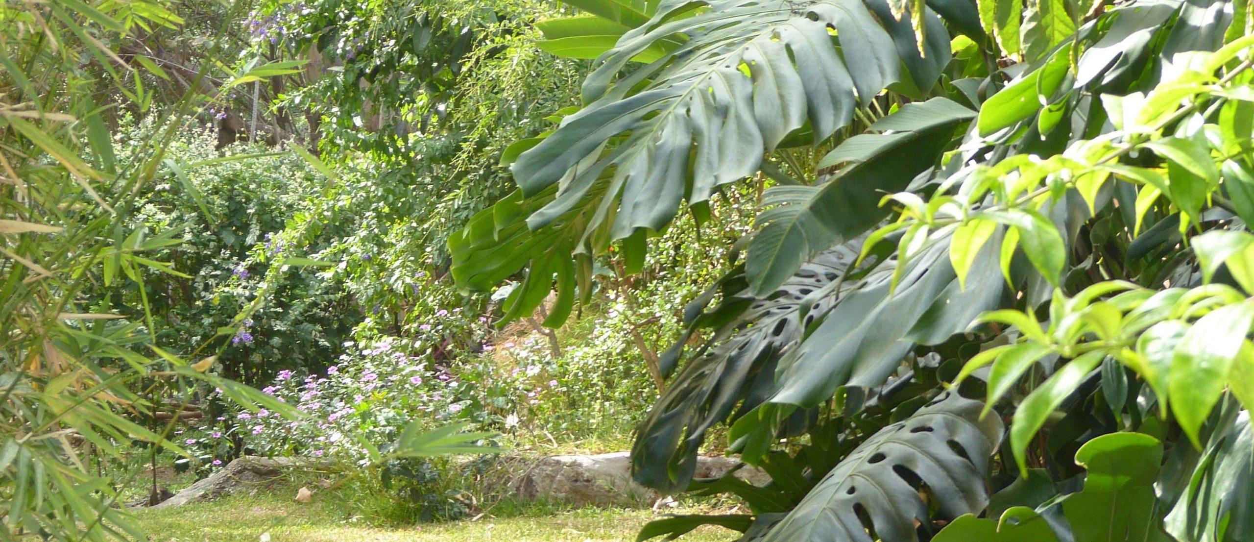 Le jardin et ses arbres